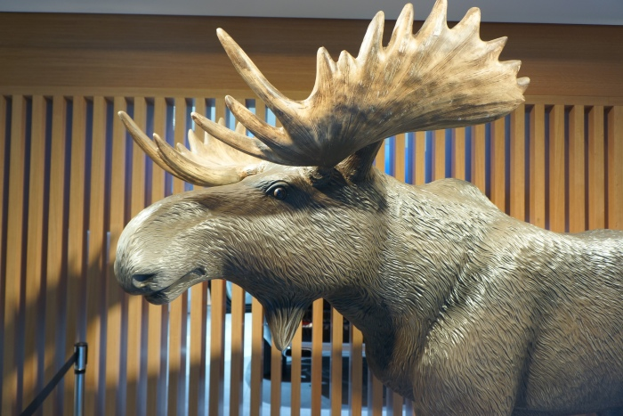 You'd call it a moose; the Swedes call it an elk